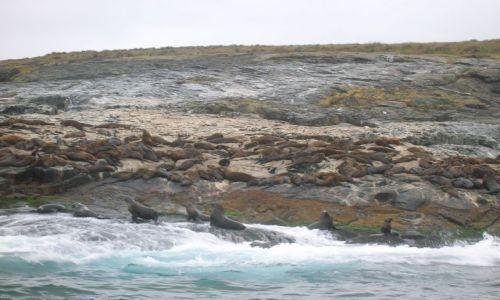 Zdjecie AUSTRALIA / NSW -kolo Narooma nad oceanem / wyspa / Foki na Montaque island