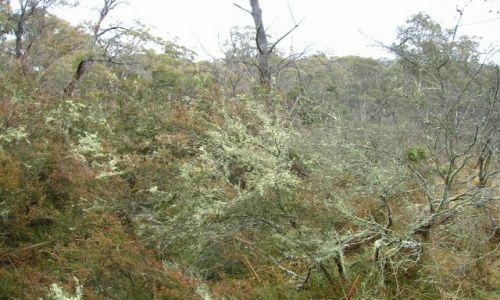 Zdjecie AUSTRALIA / NSW, niedaleko Canberry / Googong dam / Mech w buszu