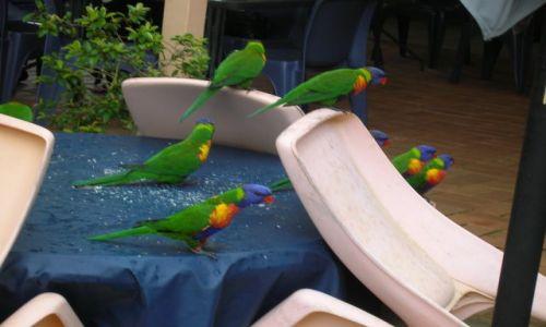 Zdjecie AUSTRALIA / Qld / okolice Gold Coast / Papugi po posilku...