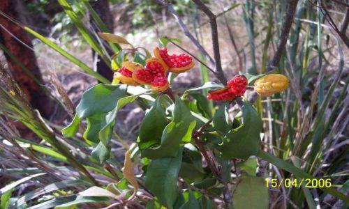 Zdjecie AUSTRALIA / Eden / nad morzem, NSW / Kolorowo