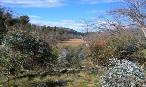 Zdjęcie AUSTRALIA / Okolice Canberry / Namagdi national park / Nursery Swamp--bagniste tereny