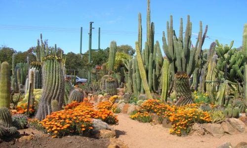 Zdjęcie AUSTRALIA / NSW, interia / w drodze / Ogrod kaktusow