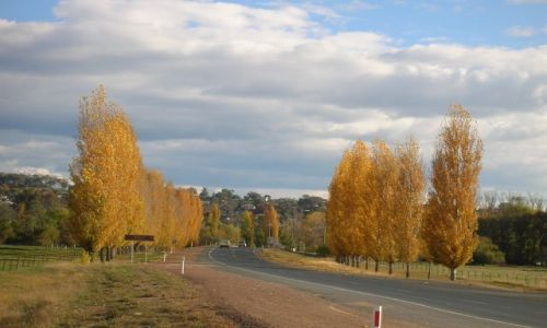 AUSTRALIA / NSW / Tumut / Jesien-kolorowe liscie niesie