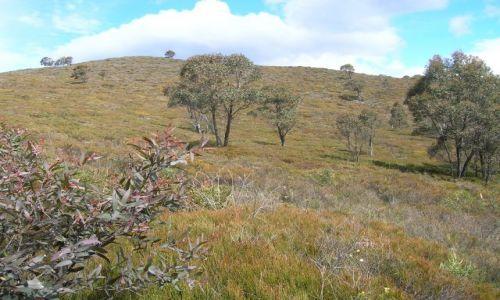 AUSTRALIA / NSW / Okolice Captainn Flat / Juz w gorach