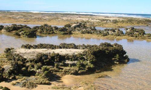 Zdjecie AUSTRALIA / NSW,  nad oceanem / Kongo, 200 km od Canberry na poludnie / Sea squirts, nalezy do zwierzat