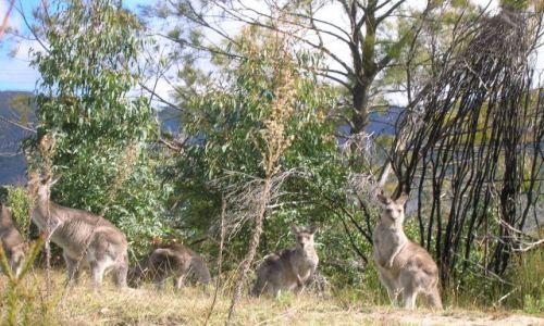 AUSTRALIA / ACT / Okolice Canberry / W buszu