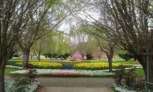 Zdjęcie AUSTRALIA / NSW / Okolice Canberry / I jeszcze wiosna