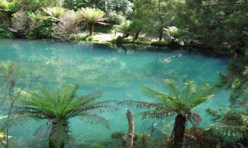 Zdjęcie AUSTRALIA / NSW / Niebieskie gory-Blue Mountains / Blue lake,obok Jenolan Caves