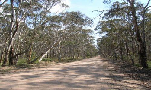 AUSTRALIA / Blue Mountains / w drodze do Kanangra Wall / Droga do stromych skal