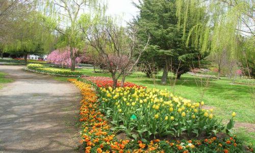 Zdjęcie AUSTRALIA / NSW / Okolice Canberry, w parku / Jeszcze troche wiosny