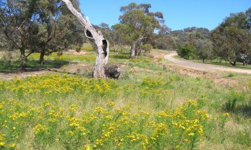 Zdjecie AUSTRALIA / ACT / Okolice Canberry / dziupla w buszu