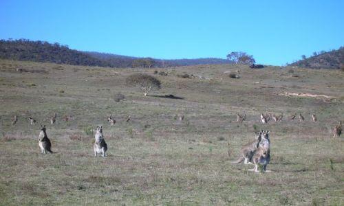 Zdjecie AUSTRALIA / ACT / Namadgi National Park / Patrza uwaznie..
