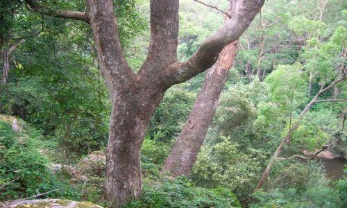 Zdjecie AUSTRALIA / NSW / Kangaroo Valley / Prawie jungla