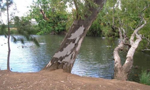 Zdjecie AUSTRALIA /  NSW /  Wagga-Wagga / Murrumbigi River i eukaliptus