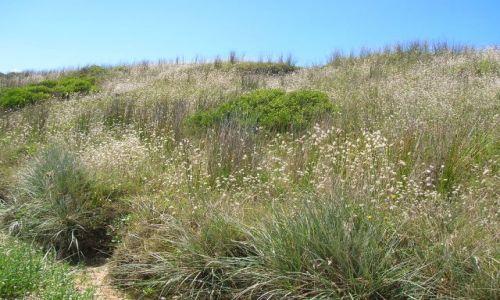 Zdjecie AUSTRALIA / NSW / Long beach / Juz lato..