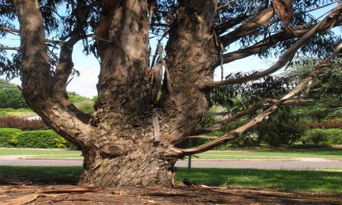 Zdjęcie AUSTRALIA / ACT / Canberra / Czesto gubie kore..