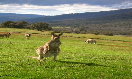 AUSTRALIA / ACT / Namadgi Nat. Park / Z dzieckiem..