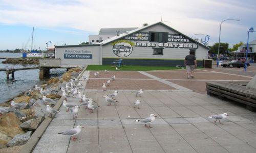 AUSTRALIA / NSW / Batemans bay. / Miejscowosc nad oceanem..i ptaki.