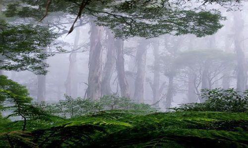 Zdjecie AUSTRALIA / Victoria / Otway Range / las deszczowy