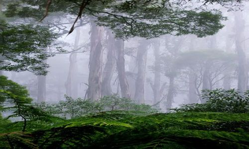 AUSTRALIA / Victoria / Otway Range / las deszczowy