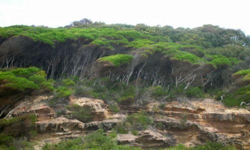 Zdjecie AUSTRALIA / NSW / South Coast / Tea trees