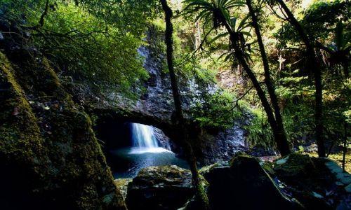 Zdjecie AUSTRALIA / poludniowy Queensland / Natural Bridge Falls / w basniowym lesie