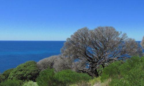 Zdjęcie AUSTRALIA / Augusta / Cape Leeuwin / nad oceanem
