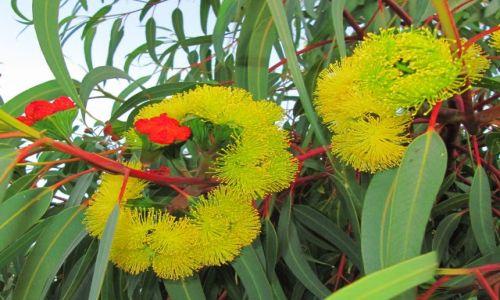 Zdjęcie AUSTRALIA / Fremantle / nadbrzeże / jesień w Australii