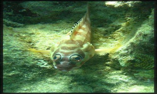 AUSTRALIA / great Barrier  reef / great Barrier  reef / Czy te oczy mogą kłamać?