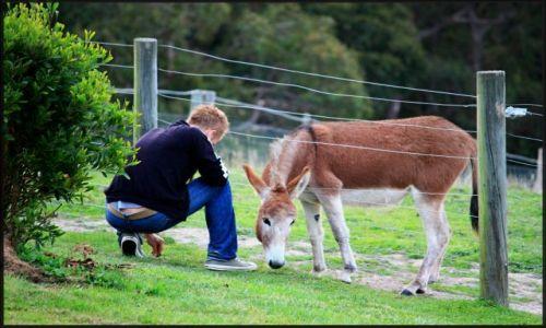Zdjęcie AUSTRALIA / Wiktoria / Pennyroyal Valley / Przyjaźń