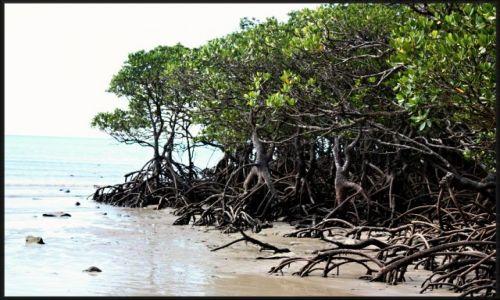 Zdjecie AUSTRALIA / queensland / okolice Cairns, rainforrest / uciekające drzewa