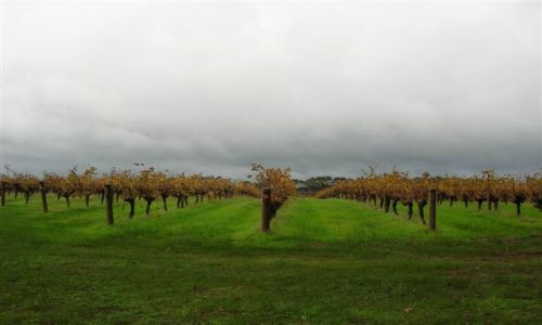 Zdjecie AUSTRALIA / WA / Margaret River / Winnice w Margaret River