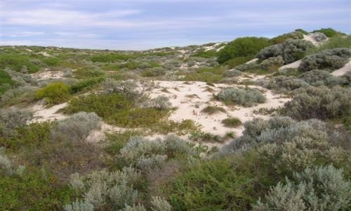Zdjęcie AUSTRALIA / WA / Perth / Wydmy przy Scarborough Beach