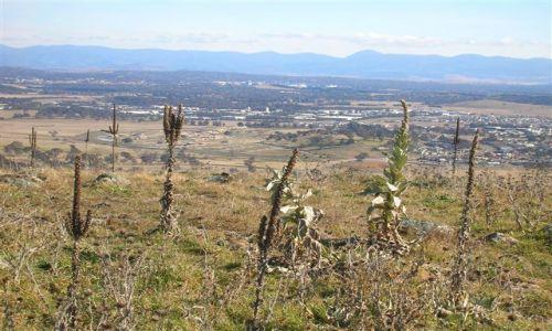 Zdjęcie AUSTRALIA / ACT / Rezerwat / Widok ze szczytu gory..