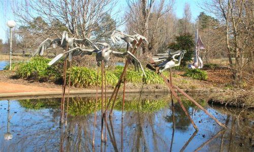 Zdjecie AUSTRALIA / ACT / Commonwealth park / Metalowe ptaki