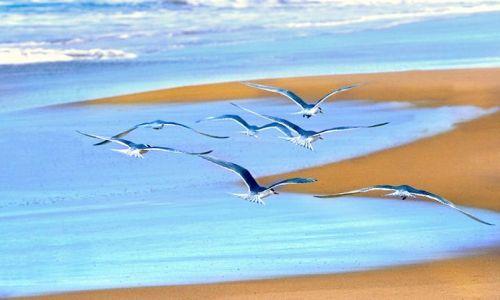 Zdjęcie AUSTRALIA / South Australia / Polwysep Florieu / poleciec tak jak one