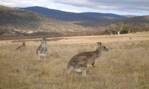 Zdjecie AUSTRALIA / NSW / Australian Alps / Ucieczka..