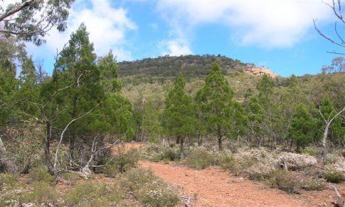 Zdjecie AUSTRALIA / interia -Riverina / Rock / The Rock--szlak na gore.