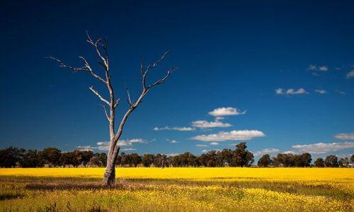 Zdjecie AUSTRALIA / Poludniowa Australia / okolice doliny Murray River / Wiosna w Poludniowej Australii