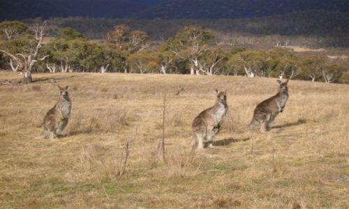 Zdjecie AUSTRALIA / ACT / Park / Pozdrowienia wigilijne