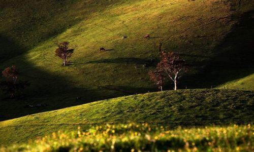 Zdjecie AUSTRALIA / Poludniowa Australia / Polwysep Florieu / ...
