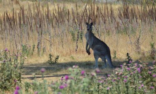 Zdjęcie AUSTRALIA / NSW / Nature Reserve / Samotny..