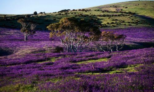 Zdjecie AUSTRALIA / South Australia / Rapid Vale / krajobraz psychodeliczny