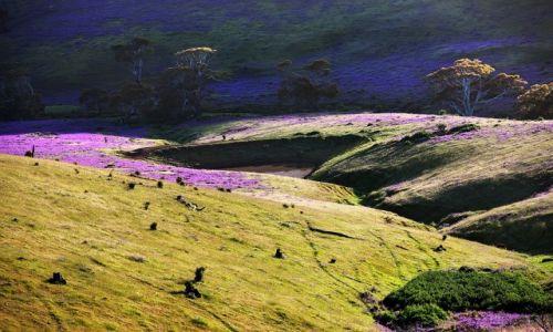 Zdjęcie AUSTRALIA / South Australia / Rapid Vale / ...