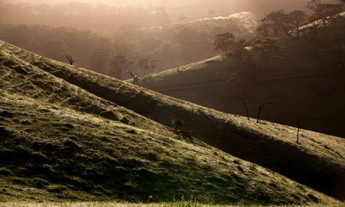 Zdjecie AUSTRALIA / -South Australia / Polwysep Fleurieu / ...