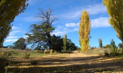 Zdjecie AUSTRALIA / NSW / Dalgety-miasteczko / Jesien w Dalgety..