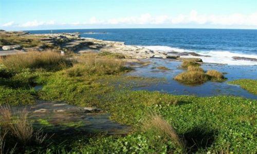 Zdjecie AUSTRALIA / Sydney / Coogee-dzielnica Sydney / Bagna i ocean..
