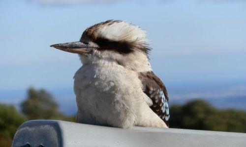 Zdjęcie AUSTRALIA / QL / Cairns / Kukubara