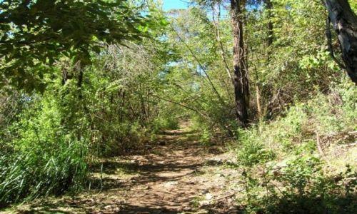 Zdjecie AUSTRALIA / NSW / Gulaga National Park / Na szlaku..