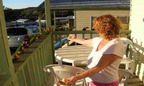 Zdjecie AUSTRALIA / Nsw / Narooma / Lekacja gotowania-krojenie jablek..